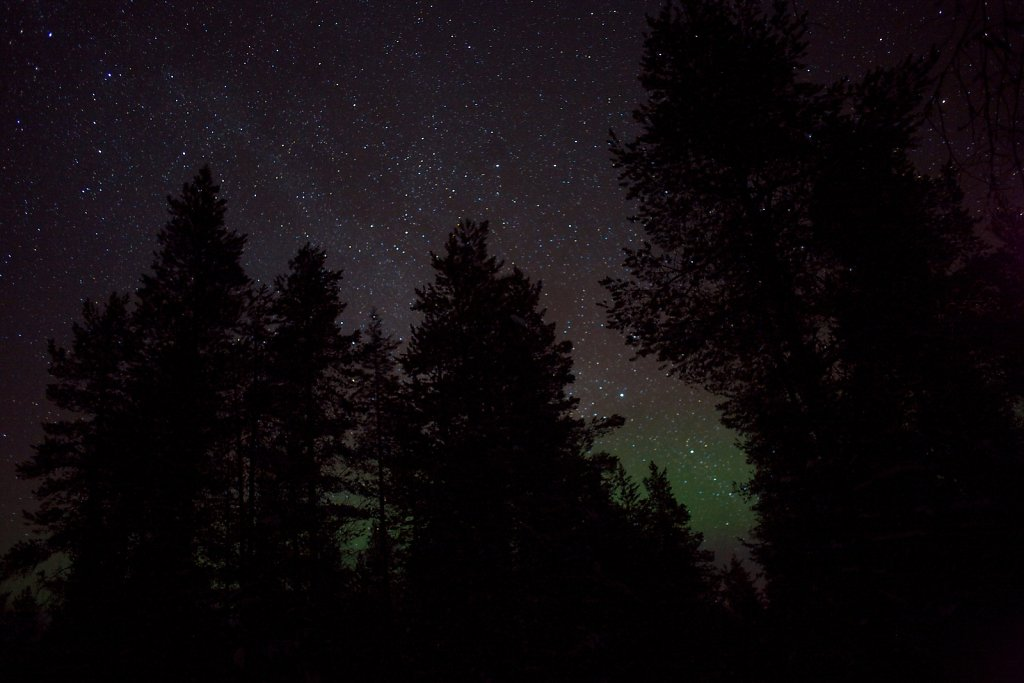 Aurora borealis in a forrest at Jokkmokk Sweden